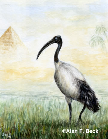 The Ibis art by Alan F. Beck